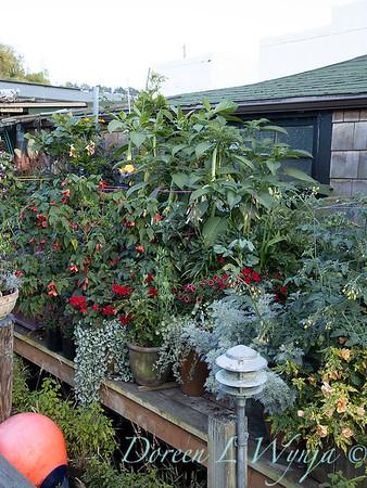Bob Lily houseboat gardening_609