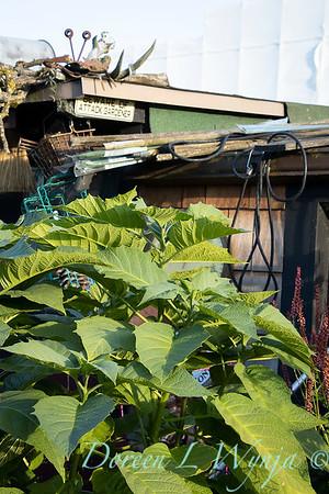 Bob Lily houseboat gardening_614