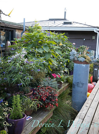 Bob Lily houseboat gardening_604