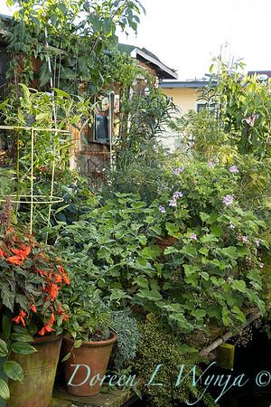 Bob Lily houseboat gardening_622