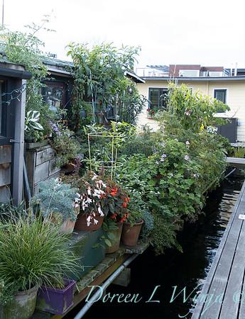 Bob Lily houseboat gardening_626