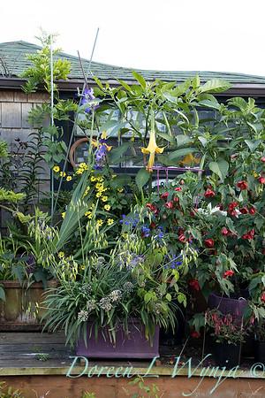Bob Lily houseboat gardening_617