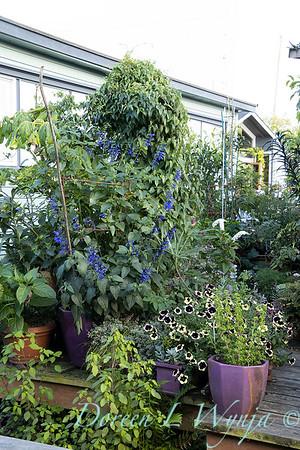 Bob Lily houseboat gardening_618