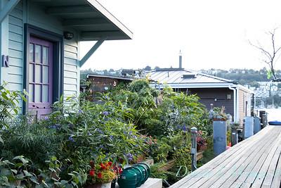 Bob Lily houseboat gardening_628