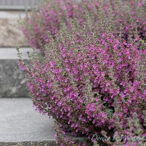 Janine & Terry's garden_1037
