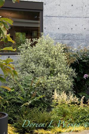 Janine & Terry's garden_1009