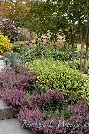 Janine & Terry's garden_1038
