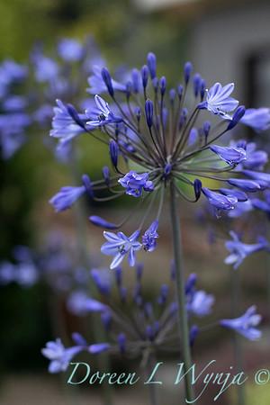 Janine & Terry's garden_1014
