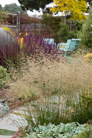 Janine & Terry's garden_1044