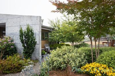 Janine & Terry's garden_1034
