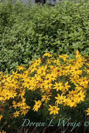 Janine & Terry's garden_1030