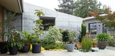 Janine & Terry's garden_1010