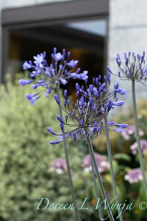 Janine & Terry's garden_1015