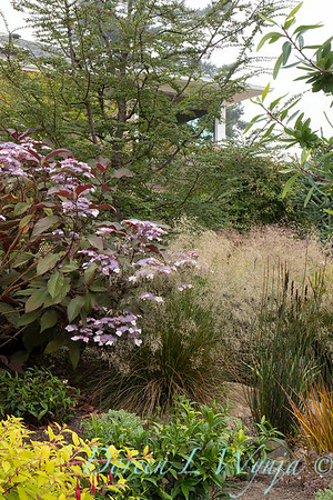 Janine & Terry's garden_1047