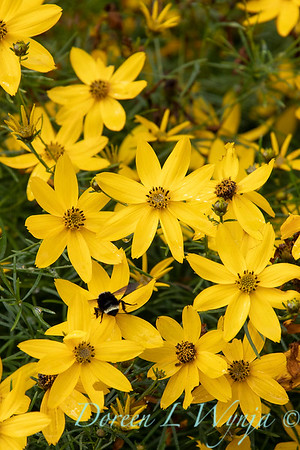Janine & Terry's garden_1031