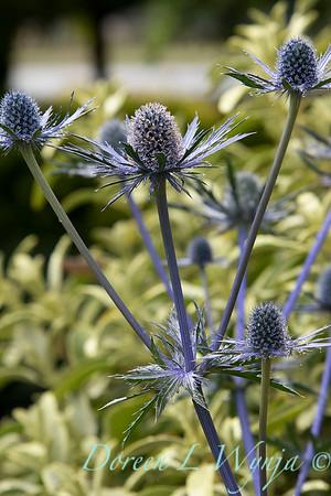 Janine & Terry's garden_1033