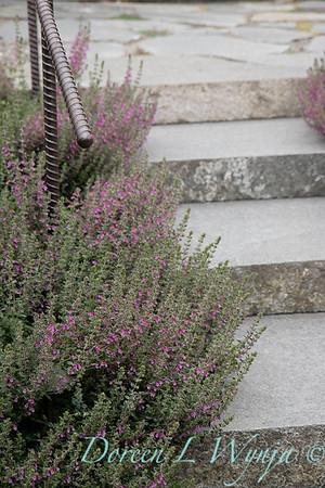 Janine & Terry's garden_1039