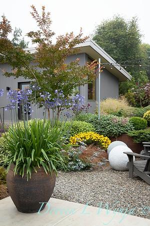 Janine & Terry's garden_1012