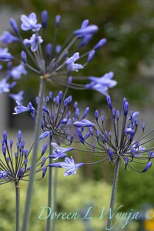 Janine & Terry's garden_1013
