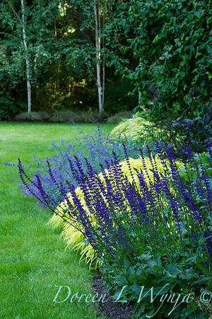 Salvia nemorosa May Night_2048