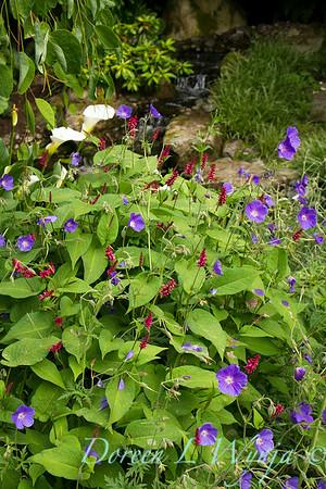 Persicaria amplexicaulis Inverlieth - Geranum Rozanne - garden textures_5902