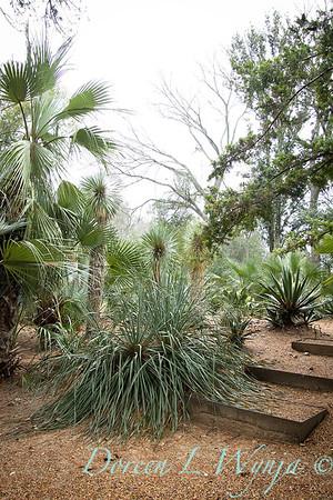 Peckerwood Garden_2098