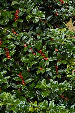 Peckerwood Garden_2122