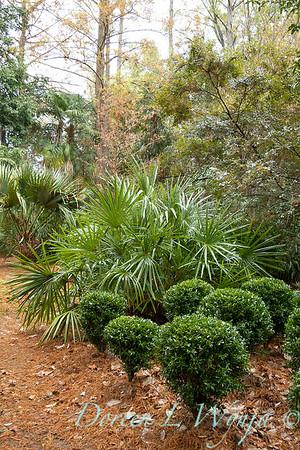 Peckerwood Garden_2081