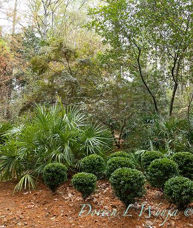 Peckerwood Garden_2080