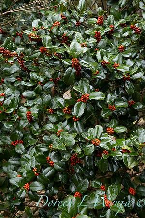 Peckerwood Garden_2121