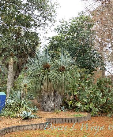 Peckerwood Garden_2111