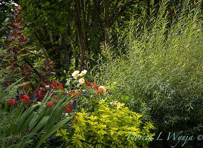 R & D garden_539