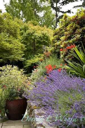 Medina project - Robin Parsons garden designer_2026