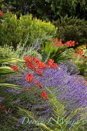 Medina project - Robin Parsons garden designer_2028
