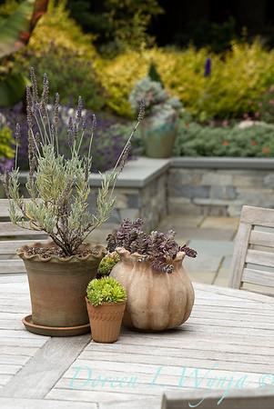 Medina project - Robin Parsons garden designer_2021