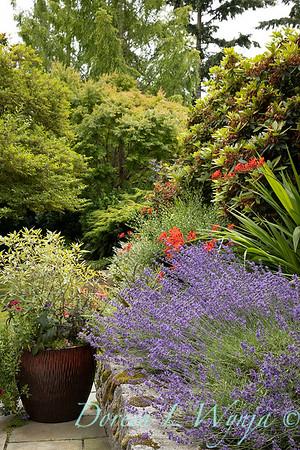 Medina project - Robin Parsons garden designer_2025