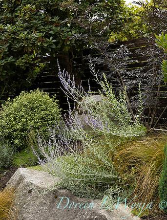 Medina project - Robin Parsons garden designer_2023