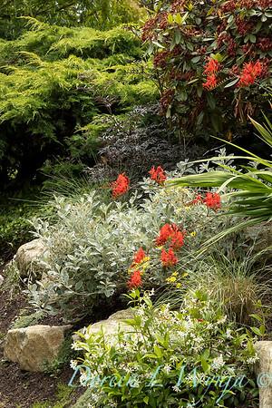 Medina project - Robin Parsons garden designer_2033