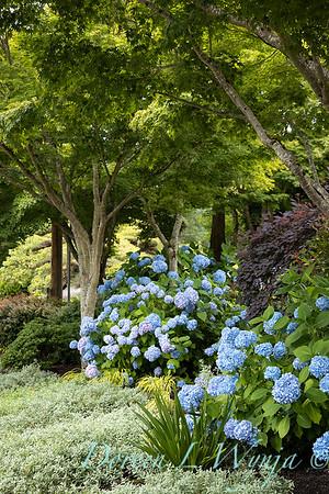 Medina project - Robin Parsons garden designer_2002