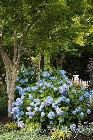Medina project - Robin Parsons garden designer_2003
