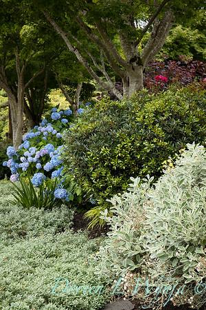 Medina project - Robin Parsons garden designer_2001