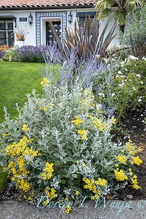 Robin Parsons garden designer - Broadmoor_1019