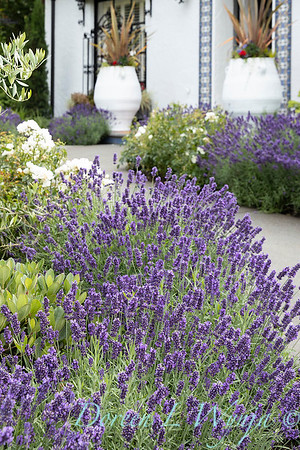 Robin Parsons garden designer - Broadmoor_1027