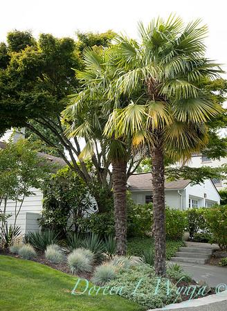 Robin Parsons garden designer - Broadmoor_1005