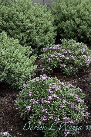 Robin Parsons garden designer - Broadmoor_1035