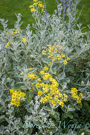 Robin Parsons garden designer - Broadmoor_1021