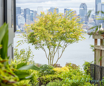 Robin Parsons garden designer - West Seattle project_2537