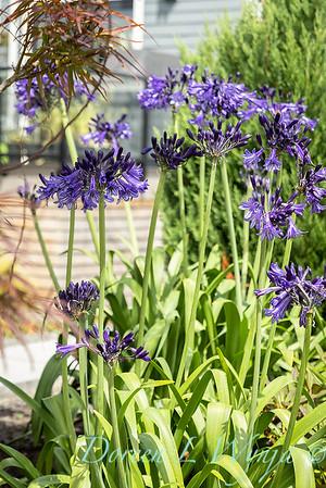 Robin Parsons garden designer - West Seattle project_2506