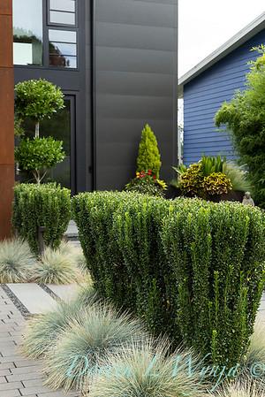 Robin Parsons garden designer - West Seattle project_2526