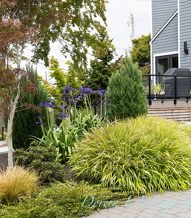 Robin Parsons garden designer - West Seattle project_2505